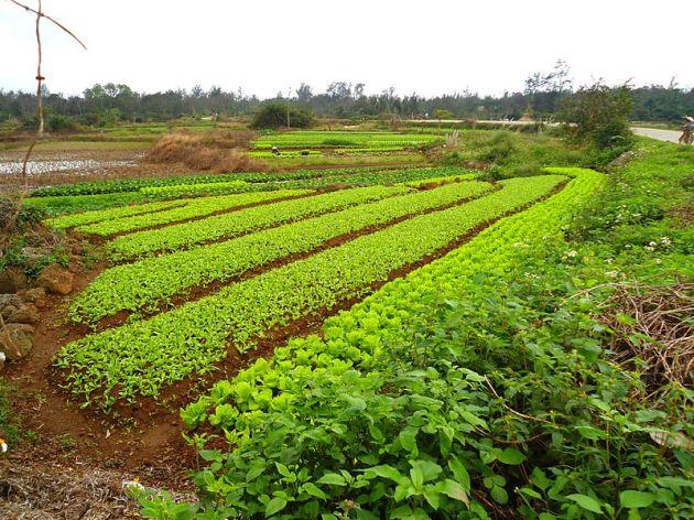 800px-Farm_in_Hainan_01.jpg